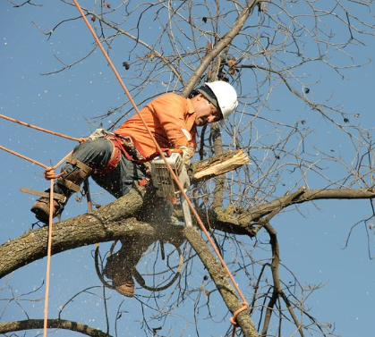 an image of tree removal in Fountain Valley, CA