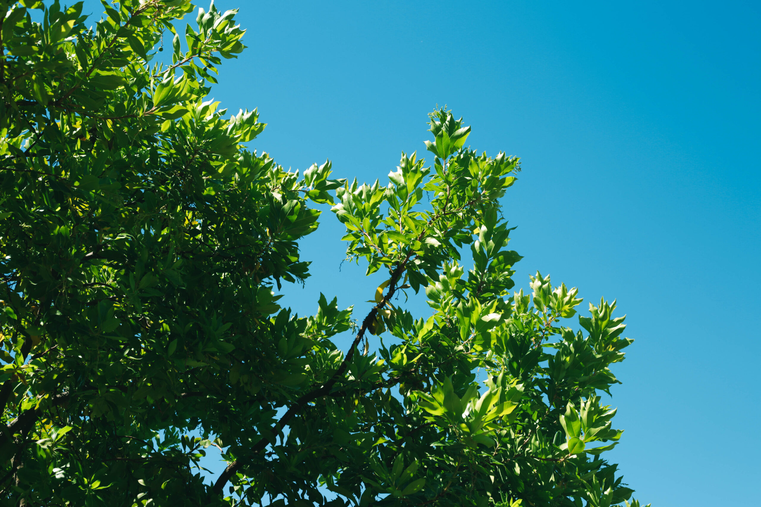 a picture of tree services in Fountain Valley, CA