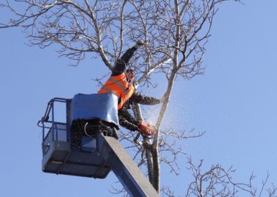 this image shows fountain valley emergency tree service