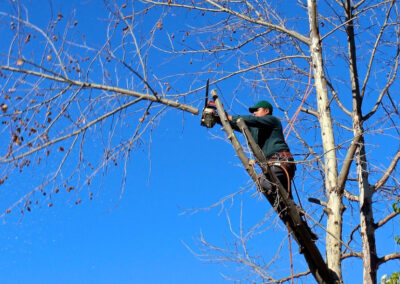 this image shows residential tree service in fountain valley california