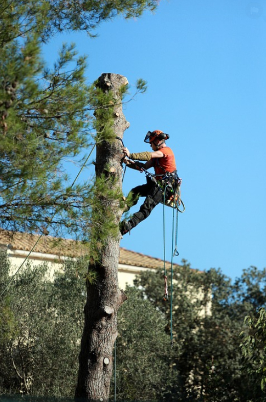 This is a picture of tree cutting in Fountain Valley, CA.