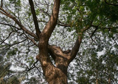 this is an image of tree doctor in fountain valley,ca
