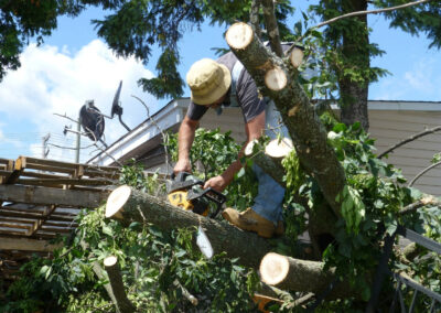 this image shows tree pruning in fountain valley california