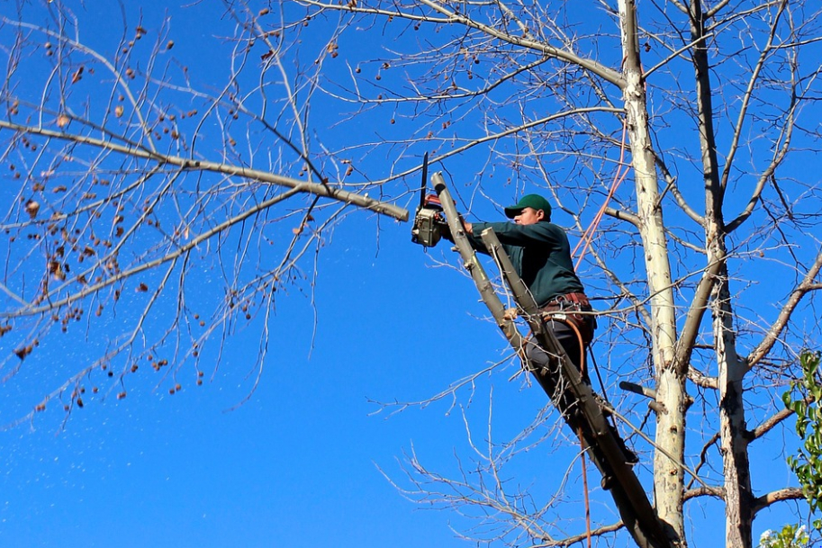 This is a picture of residential tree service in Fountain Valley.