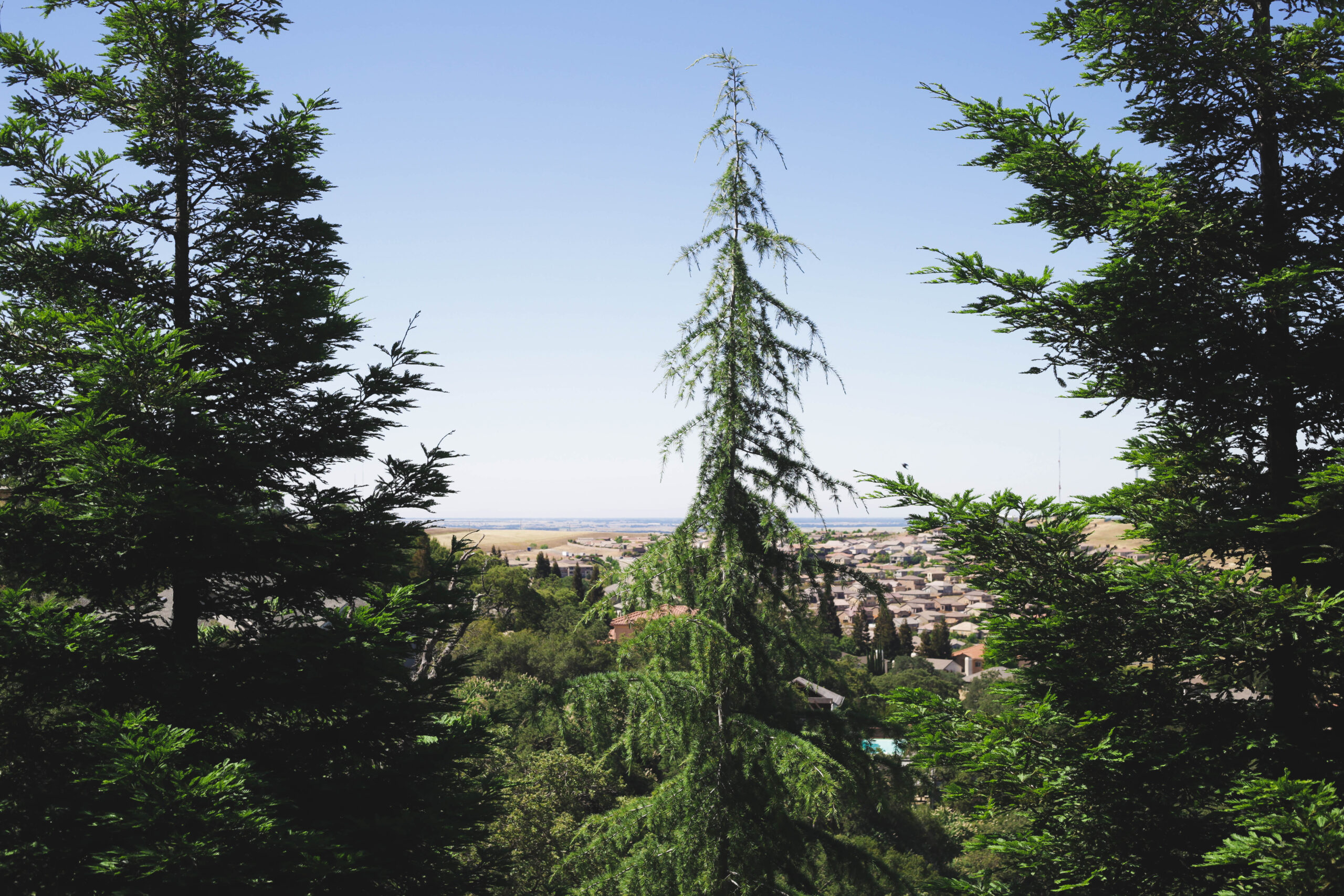 An image of types of trees Fountain Valley service.